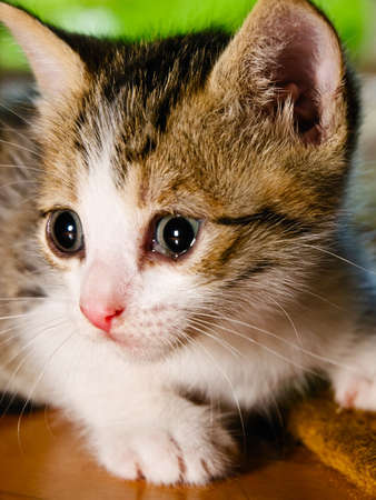 Small kitten looking in the distance. Stock Photo