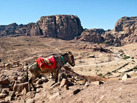 nabataeans: Bedouin donkey against river of tourists in Petra - Nabataeans capital city (Al Khazneh) , Jordan.