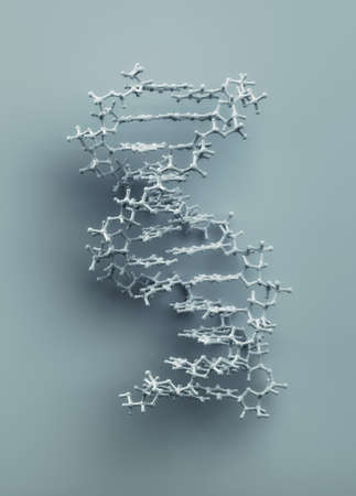 protein structure: DNA structure molecule 3D rendering. Exact representation of DNA  from protein data bank. Stock Photo