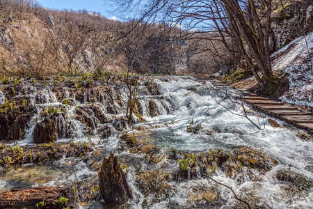 Vegetation just before it begin to rebuild after long winter  Plitvice lakes national park in Croatia  photo