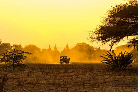 horse cart: Sunset in Bagan with silhouettes of the pagodas and a horse cart transports tourists.