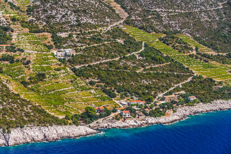 biological vineyard: Famous Croatian vineyards with Dingac grapes  Cultivated only on this small part of Peljesac peninsula near the sea in Dubrovnik archipelago