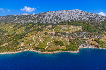 Famous Croatian vineyards with Dingac grapes  Cultivated only on this small part of Peljesac peninsula near the sea in Dubrovnik archipelago  photo