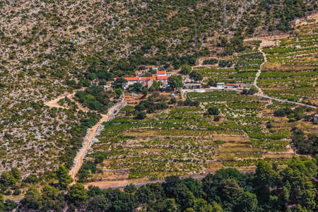 biological vineyard: Famous Croatian vineyards with Dingac grapes. Cultivated only on this small part of Peljesac peninsula near the sea in Dubrovnik archipelago.