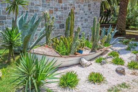 planted: Small cactus garden with various cacti planted in an old wooden boat.