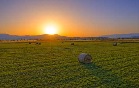 Hay bale in the countryside, Croatia. A beautiful landscape near Sinj, Croatia.