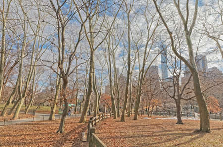 New York trees in Central Park winter time