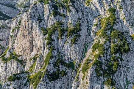 Helicopter aerial photo of the river Tara canyon wall in Montenegro continental part and mountain nature. 写真素材
