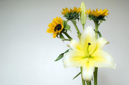 Flores Lirio y Girasol flower Stock Photo