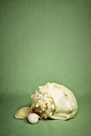 Conch, nautilus, and clam shell against colored background.