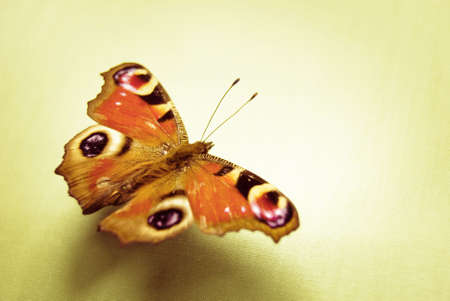 Sunny vintage style photograph of butterfly displaying dramatic eyespots. Standard-Bild