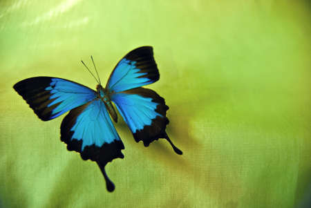Bright blue butterfly against green background