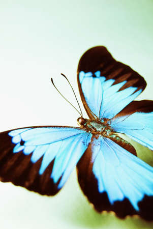 Vibrant blue butterfly, close up and abstract crop.