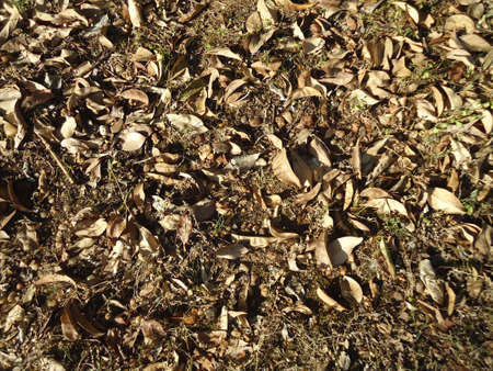 hojas: dry leaves on the ground without grass
