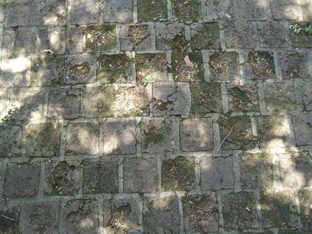ceramica: old moldy brick floorantiguo  piso de ladrillo con moho velho piso de tijolos mofados