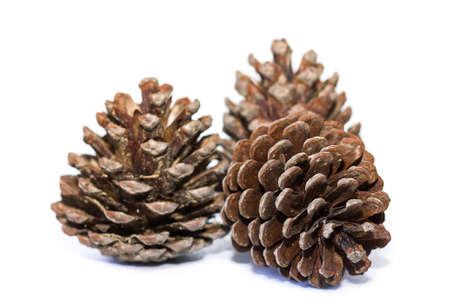 pinecone: Pinecone isolated on white background