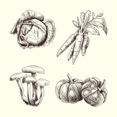 Vegetable set sketch autumn food hand drawn vector illustration Illustration
