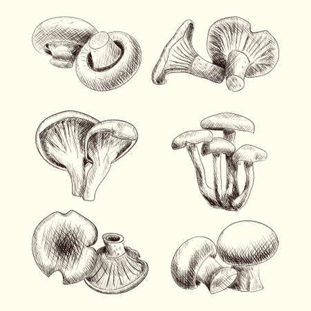 boletus: Mushroom set sketch hand drawn vector illustration