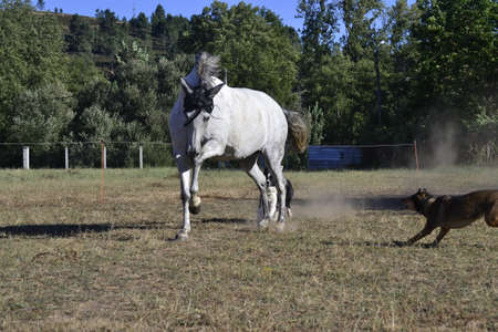 Horse running free at sunny day