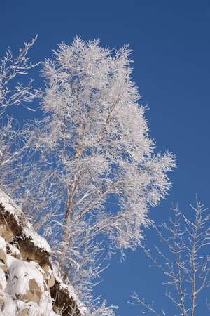 iceflower: ice-fiore