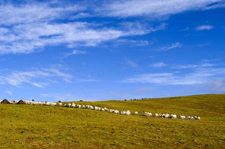 tableland: shepherd on the plateau