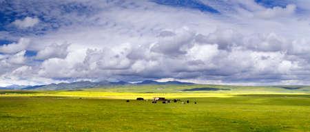 tableland: tableland grazing Stock Photo