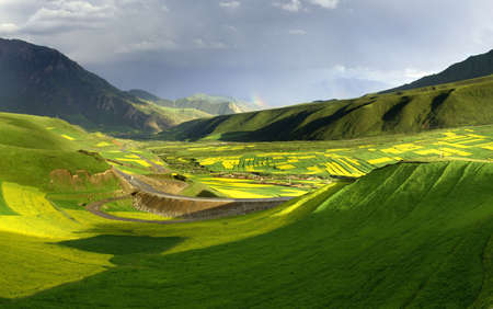 tableland: cole flowers