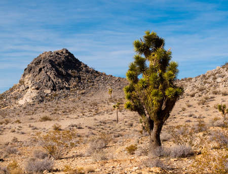 A cactus thriving in a barren desert. photo