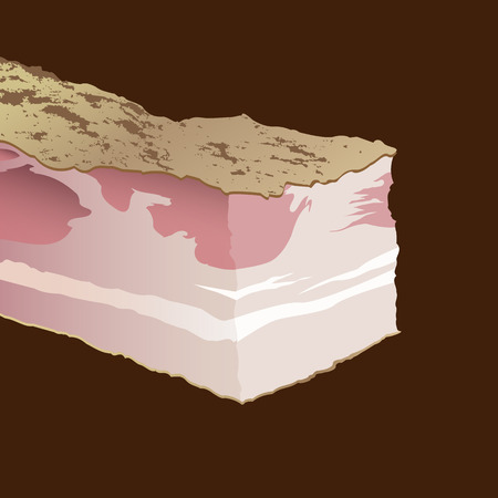 Raw pork fat bacon on a brown background. Isolated vector illustration Illustration