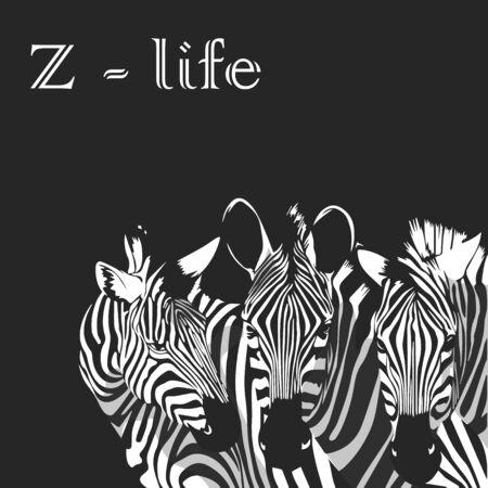 Three Zebras portrait poster. Z-life slogan. Vector illustration. 向量圖像