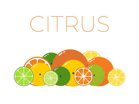Vector Citrus Fruits pack and sliced half of Citrus on white background
