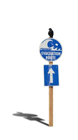 tsunami: Bird resign on tsunami evacuation warning sign.