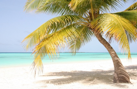 brighter: palm on the sandy beach of maldives