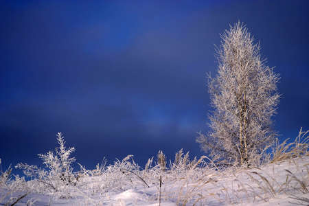 Mystical landscape with frozen russian winter about -40 C degrees - very cold weather. Snow on the frozen trees and grass. Stock Photo - 658718