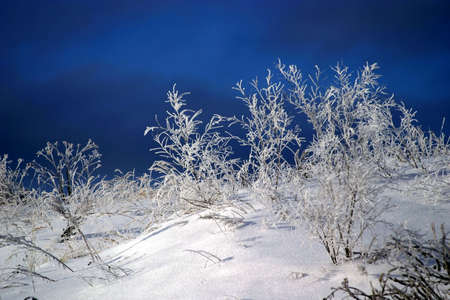 Mystical landscape with frozen russian winter about -40 C degrees - very cold weather. Snow on the frozen trees and grass. Stock Photo - 658689