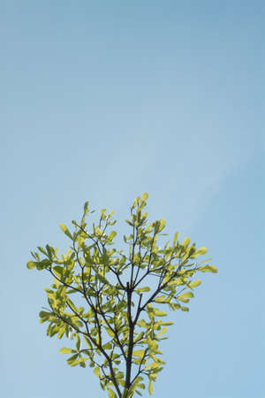 sunlight sky: The branch of tree against the sky in the sunlight