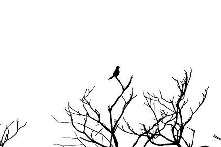 Silhouette bird Stock Photo