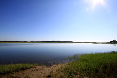 salt marsh: Calm marsh