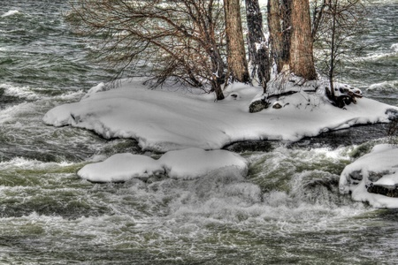watered: Frozen watered trees
