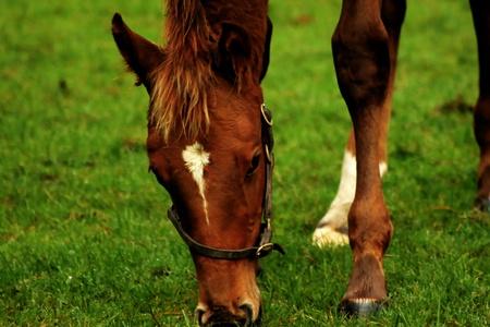 Horse look 4 photo