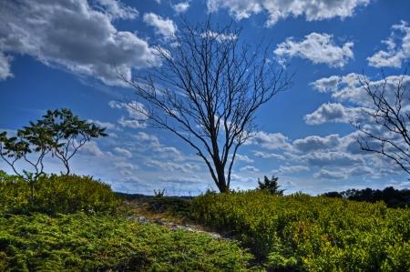 Single Tree Stock Photo - 17400678