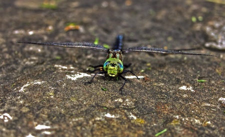 Dragonfly on rock  Stock Photo - 17400742