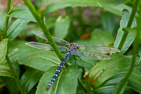Dragonfly on daisie Stock Photo - 17690618