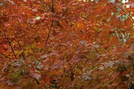 Colourful fall trees   Stock Photo