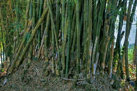 Sugar cane 91 Stock Photo