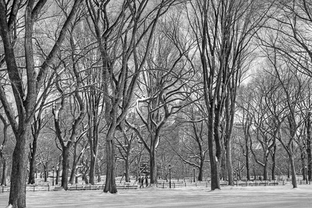Central Park winter 148 bw Stock Photo