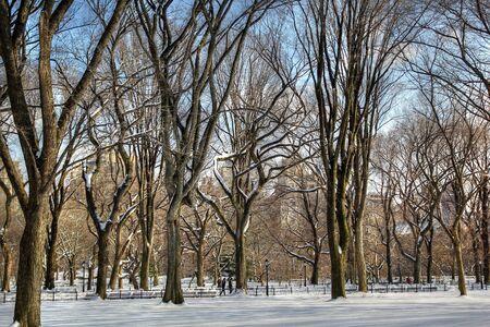 winter park: central Park winter trees Stock Photo