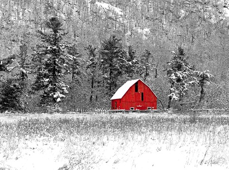 Winter barn scene at Gatineau Park black white and red