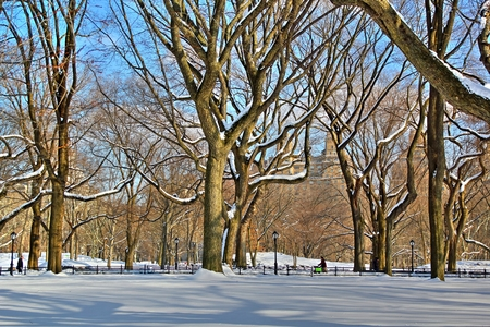 Winter view of trees in Central Park Stock Photo