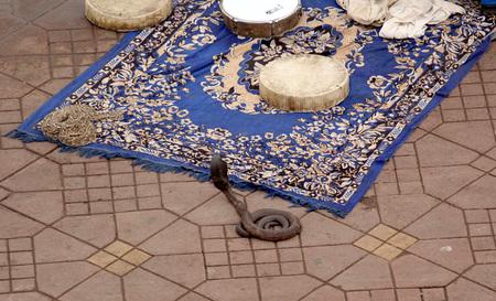 Charmed Lonely Snake Foto de archivo - 102913068